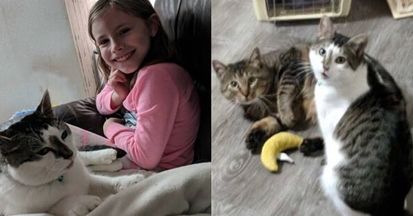 Woman Adopts Sick Cat From Shelter— Returns One Week Later To Get Best Friend Too