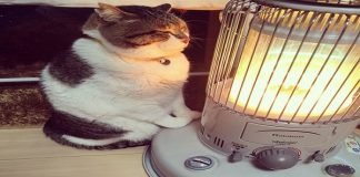 It's Pretty Cold Right Now, And This Cat Surely Won't Leave The Heater's Side Soon!
