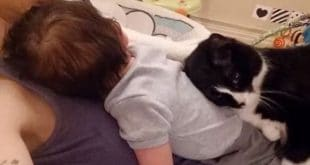 Cat Kept Baby Safe Before the Little Hooman Was Even Born!
