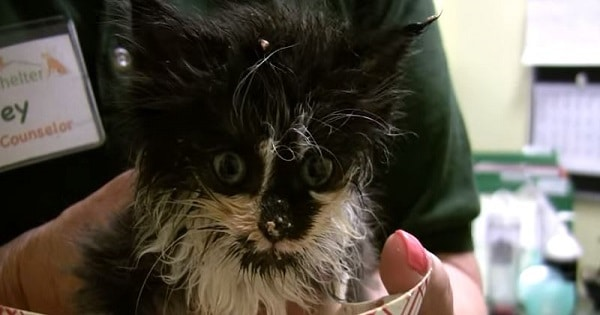 Watch This Stray Kitten Devour Her First Meal After Being Rescued!