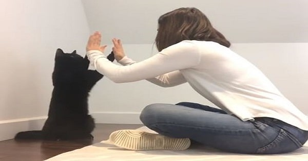 Just Wait Until You See This Cat's Supercomputer Handshake!