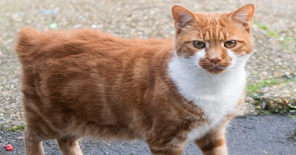 Dave The Cat Banned From Shop After 13 Years Because Of Just One Complaint From An Anonymous Patron!