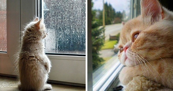 10+ Sad Cats Who Are Pining For Their Humans To Come Home!