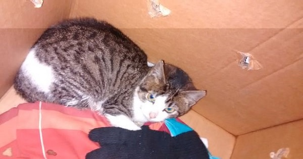 Cat Rescued From Crusher After Being 'Dumped' At Recycling Center!