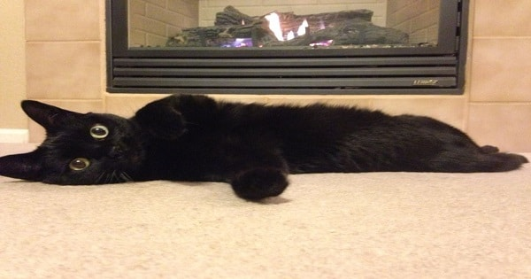 According To One Owner, Selfies Are To Blame For Black Cats Not Being Adopted!