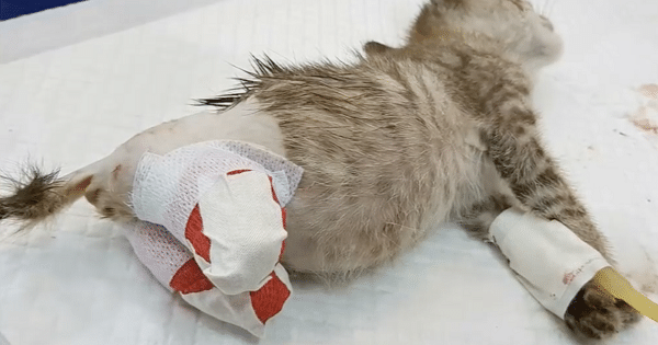 This Poor Broken Kitten Was About To Die In A Trashcan Until Kind People Gave It Another Shot At Life!