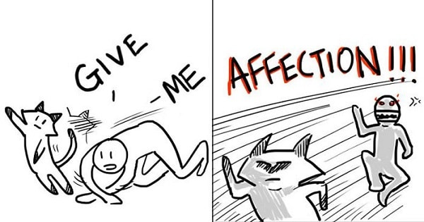 10+ Hilarious Comics That Reveal The Reality Of Having A Cat