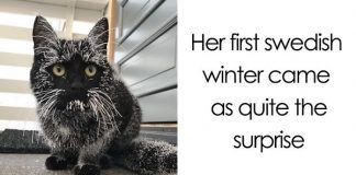 These Animals See Snow For The First Time, And They're Surely Loving It!