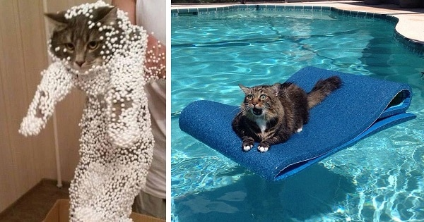 Just Take A Look At These Cats Who Regretted Their Poor Choices! We Can't Stop Laughing!