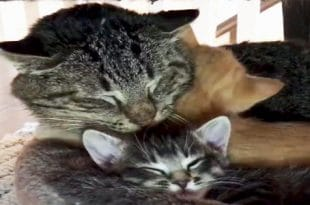 Foster Kittens Teach Elderly Feral Cat To Love