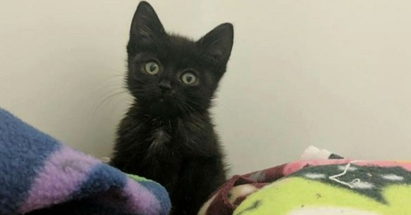This Abandoned Kitten Couldn't Meow, But A Couple Rescued Her And Helped Her Find Her Voice Again