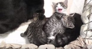 This Cat Wins The Mother Of The Year Award!
