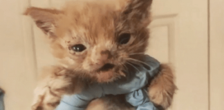 Poor Kitten Was Literally 'Thrown Out' Because Her Face 'Looked Weird' - Watch Her Inspiring Story!