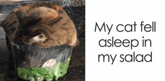 "10 Hilarious ""If It Fits, I Sits"" Cat Pics!"