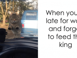 10+ Hilarious Cat Snapchats That Will Make Your Day