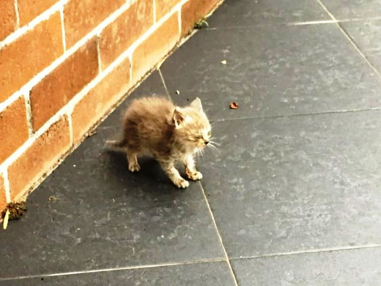 Abandoned And Covered In Ants, This Kitten Needed A Miracle To Survive 1