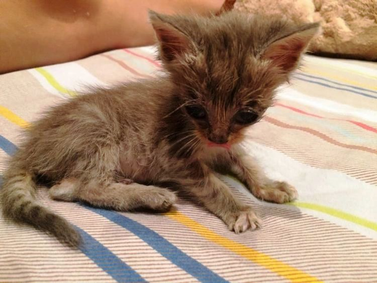 Abandoned And Covered In Ants, This Kitten Needed A Miracle To Survive 2