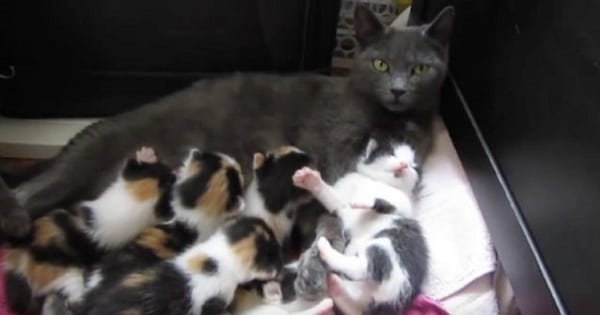 A Rescued Cat Gives Birth To 8 Tiny Kittens With Unique Fur Pattern!