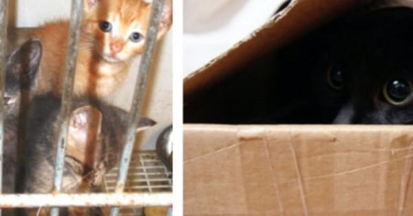 """A Woman Looks For The """"Least-Adoptable"""" Cat In A Shelter – Here's Who They Gave Her"""