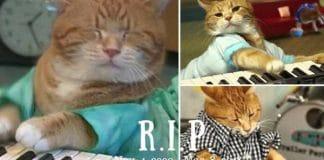 SAD NEWS – Bento The Keyboard Cat, Dies at Age 9