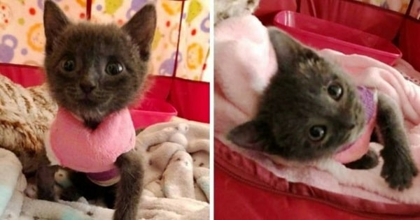 This Cute Kitten Is A Huge Fighter Who Escaped The Claws Of Death Twice!