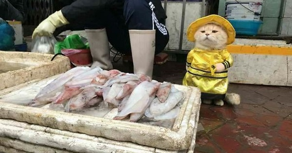 There's a fish-selling cat named Dog living in Vietnam, and Twitter is head over heels in love