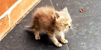 Abandoned And Covered In Ants, This Kitten Needed A Miracle To Survive