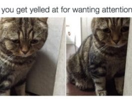 10 Things Cats Do That You Will Relate To