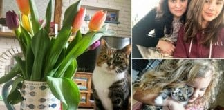 A Woman Posts Cute Pictures Of Her Kitty With Tulips Unaware That The Flowers Would Kill The Cat The Next Day!