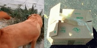 Curious Dog Drags Owner Towards Mysterious Cardboard Box, With Something In It