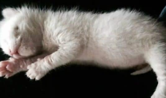 """Everyone Thought This Kitty Looked As An """"Alien Rat"""", But Take A Look At The Little Angel Now!"""