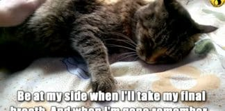 If You Have A Cat, You Should Never Forget These Things!