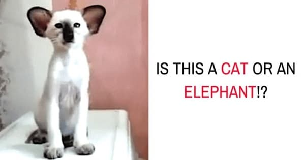 Is It A Cat Or An Elephant?!