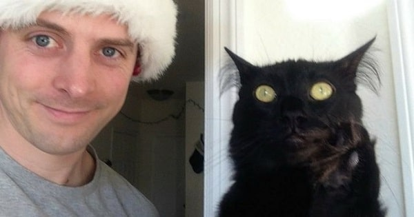 """People Are Dumping Black Cats Because """"They Don't Look Good In Selfies"""""""