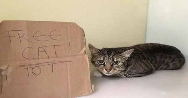 Poor Kitty Abandoned With 'Free Cat' Sign on Side of a Road!