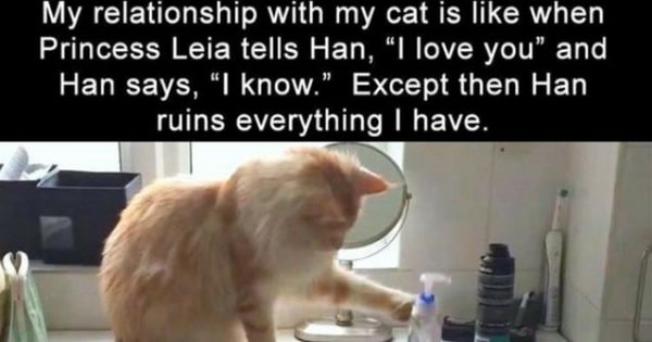 These Cat Memes Are Just Hilarious!