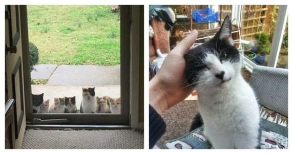 These Cats Decided To Pick Their Owners Instead Of Waiting To Be Adopted!