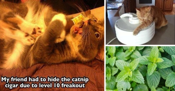 These Hilarious Cats Are High On Catnip!