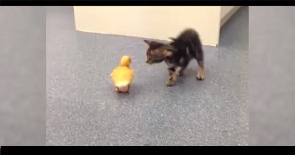 These Kittens Are Caught Doing Things For The First Time And It's Too Adorable To Watch!