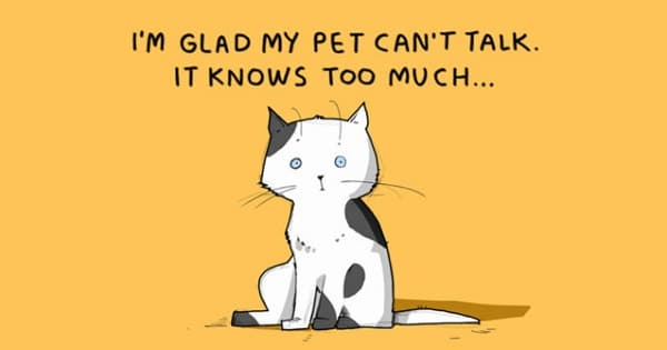 Want To Learn More About Cats? Check Out These Facts!