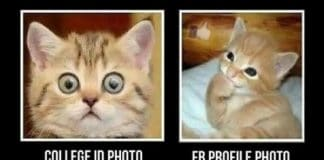 10 Cat Memes That Will Surely Crack You Up