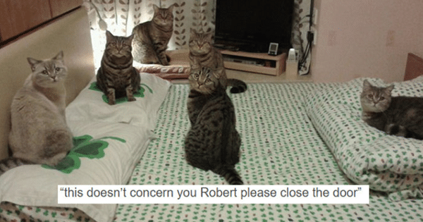 10 Hilarious Cat Posts That Will Definitely Crack You Up