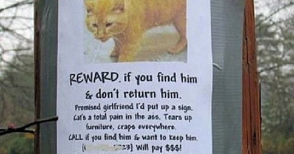 10 Hilarious Posters For Missing Cats