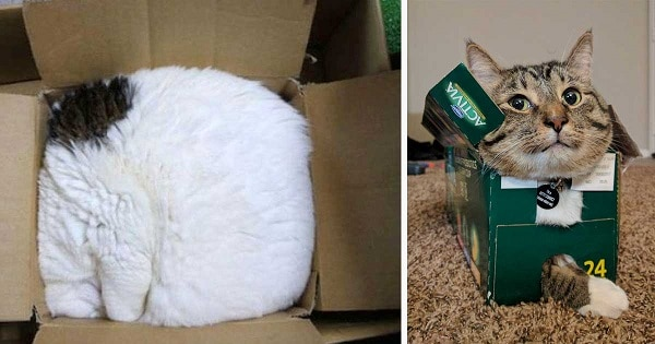 15+ Hysterical Cats Who Have No Concept Of What A Bed Is