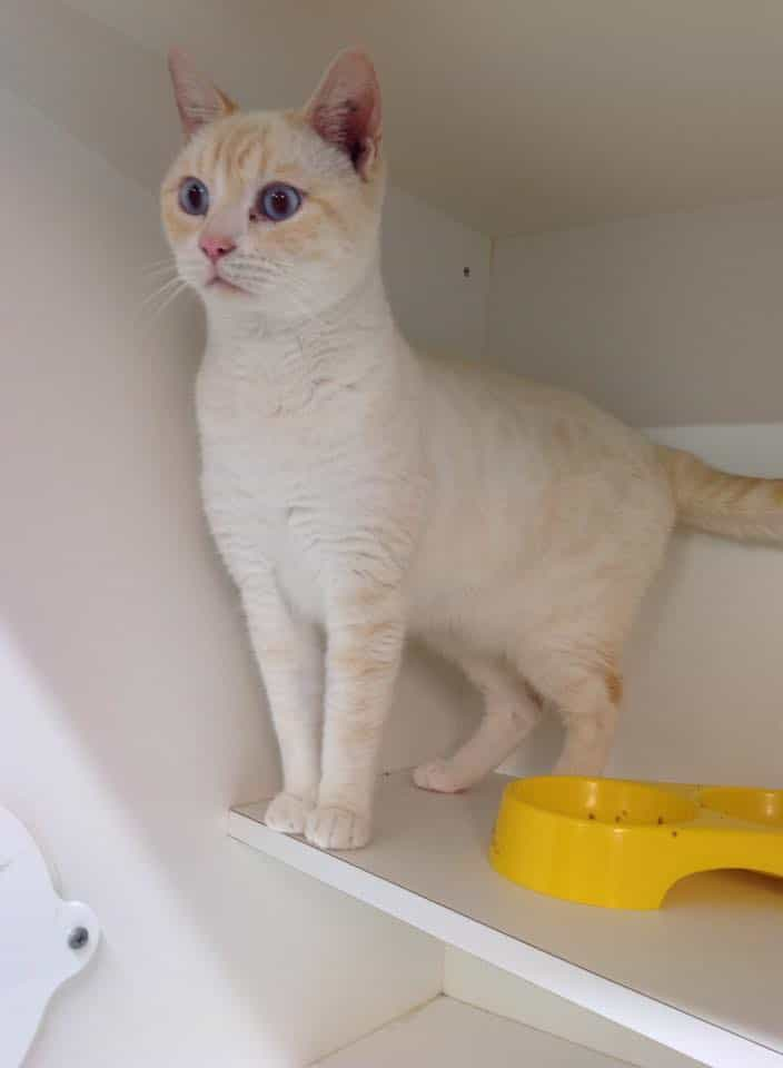 Shelter Cat Licks Window To Get Adopters' Attention And Find Forever Home 3