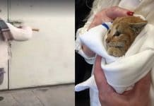 A Couple Heard Noise From A Nearby Dumpster and Found A Tiny Scared Kitten Asking For Help!
