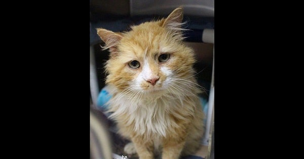 Cat Walks 12 Miles Home To Family That Didn't Want Him