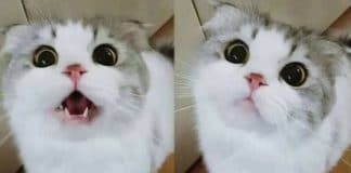 Cute Confused Cat Has The Hiccups And Doesn't Know What To Do!