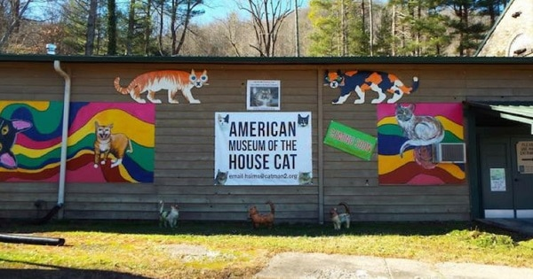 Looking For a Purrrrfect Road Trip Destination? Visit American Museum of the House Cat