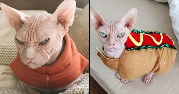Meet Loki ,The New Grumpiest Cat In The World!